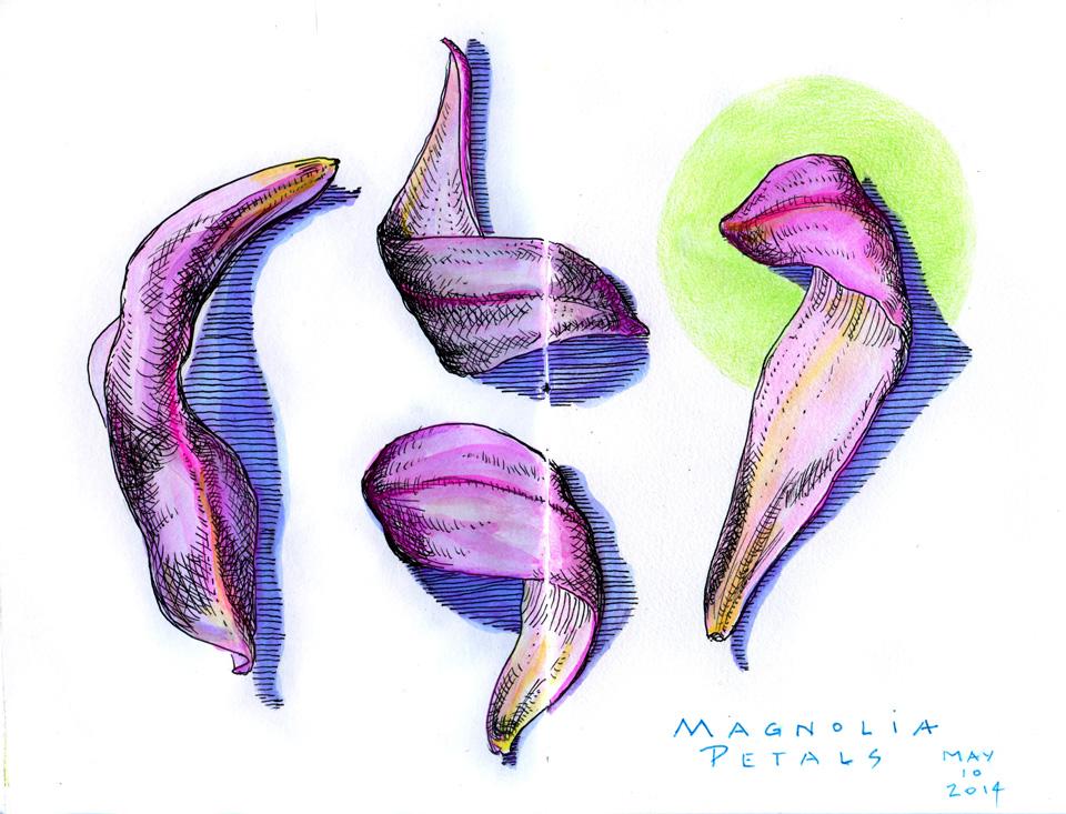 Magnolia petals blog
